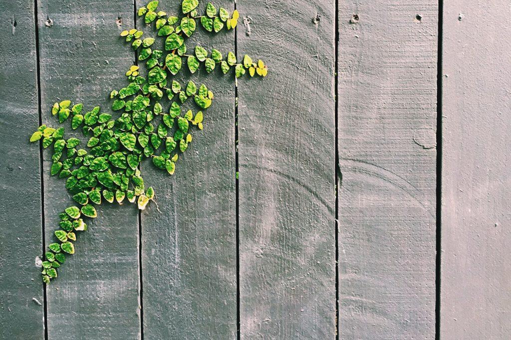 Clôture en bois avec mauvaise herbe