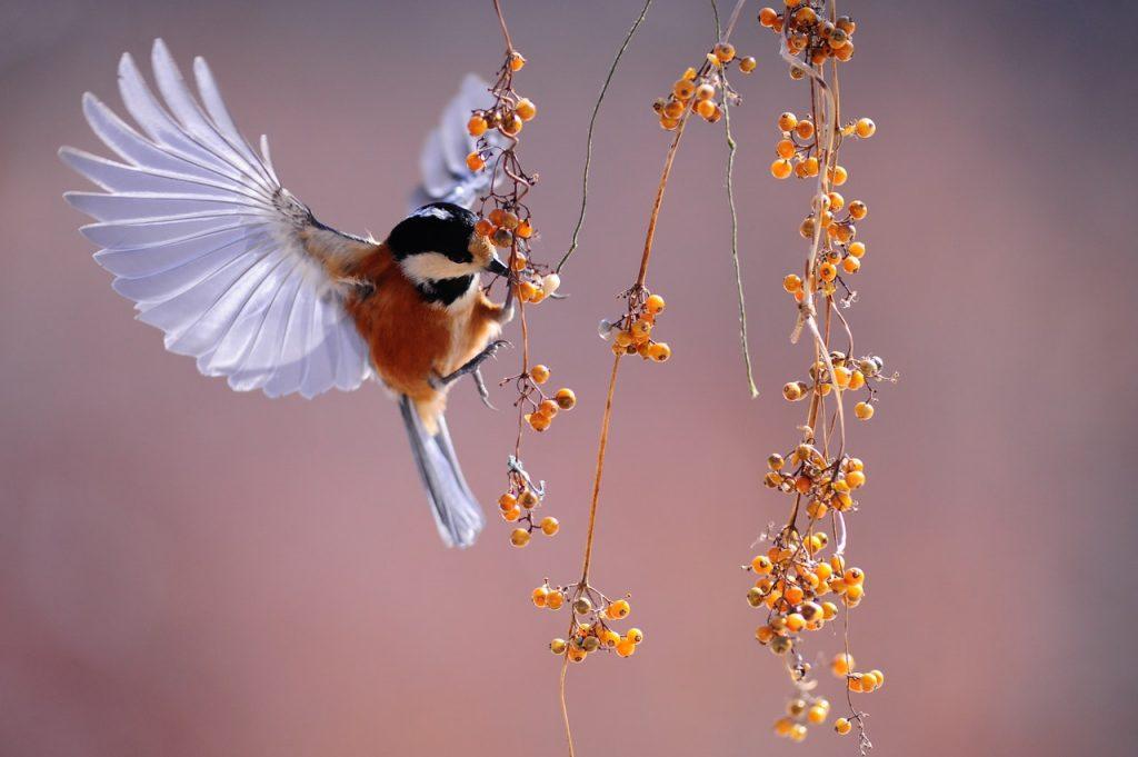 Petit oiseau de type moineau volant et mangeant