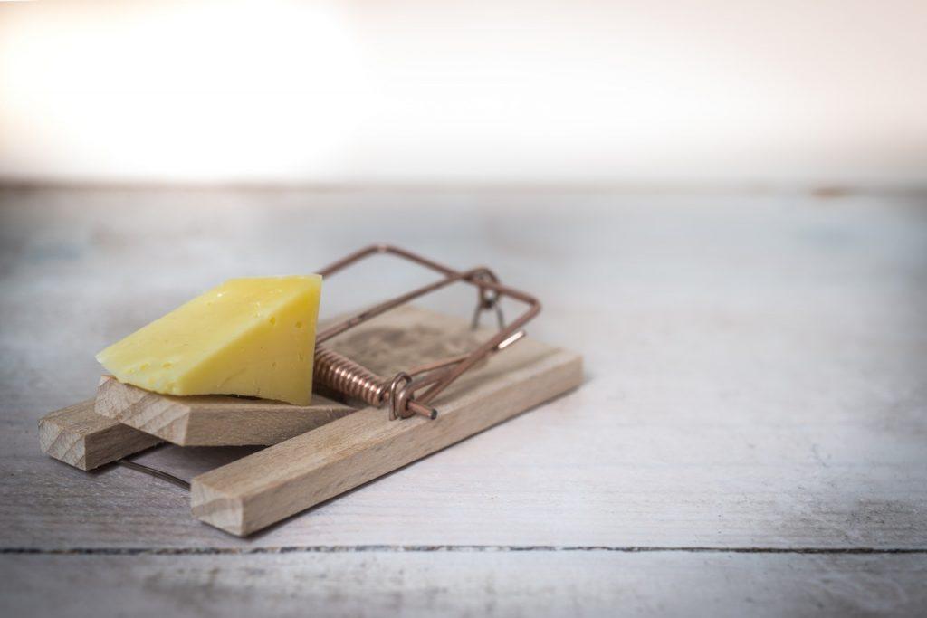 Piège à rat avec petit morceau de fromage