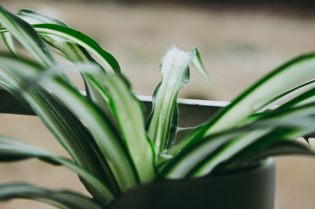Plante verte avec longue feuille