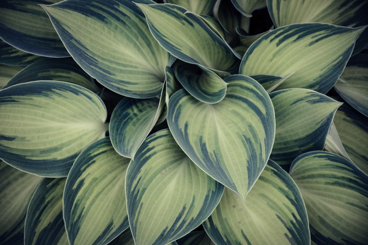 Plante verte avec grosses feuilles
