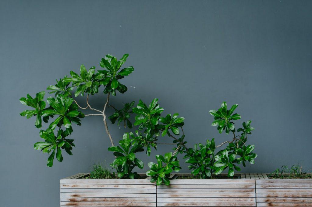 Plante disposées dans des jardinières en bois