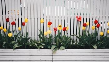 7 Types de Clôtures que Vous Pouvez Installer Chez Vous