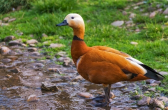 Comment Faire un Bassin pour Canards ?