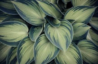 5 Conseils pour Avoir un Beau Jardin, Sans avoir la Main Verte ?